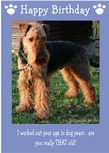 "Airedale Terrier-Happy Birthday - ""Are You Really THAT Old"" Theme"